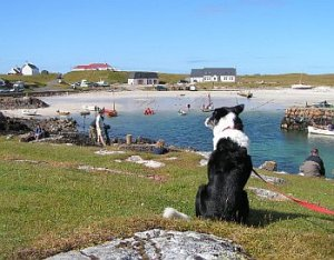 tiree-scarinish-harbour